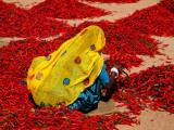 Woman Sorting Red Chillies Papier Photo par Hira Punjabi