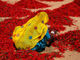 Woman Sorting Red Chillies Fotodruck von Hira Punjabi