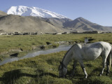 White Horse Infront of a Snow Capped Muztagh Ata at Lake Karakul, Near Kashgar Photographic Print by Christopher Herwig