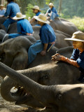 Elephants Laying Down with their Guides Atop at a Chiang Mai Elephant Camp Photographic Print by Felix Hug