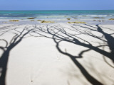 Shadow of Trees on Deserted Beach Photographic Print by Johnny Haglund
