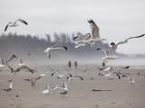 Seagulls on Beach Photographie par Christopher Herwig
