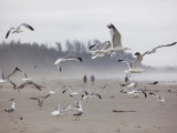 Seagulls on Beach Photographic Print by Christopher Herwig