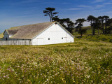 Historic Farm House Surrounded by Wildflowers at End of Pierce Point Road Photographic Print by Emily Riddell
