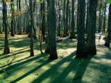 Bald Cypress Swamp in Big Bayou Black Fotografisk tryk af John Elk III