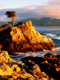 Cypress Tree in Coastal Cliff Photographic Print by Douglas Steakley