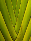 Detail of Palm Leaf Photographic Print by Guylain Doyle