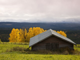 Traditional Wooden Barn, Yellow Aspens and Fjells with First Snow in Autumn Photographic Print by Christer Fredriksson