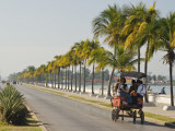 Horse Cart Bus Going Down Palm Tree-Lined Paseo Del Prado Photographic Print by Frank Carter