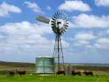 Watering Cattle Beneath Windmill on Darling Downs, Southern Queensland Photographic Print by Philip Game