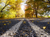 Autumn Leaves on Old Federal Highway Photographic Print by Oliver Strewe