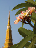Frangipani Tree and Spire at Royal Palace Photographic Print by Antony Giblin