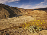 Brittlebush Blooming in Spring at Darwin Canyon Near Panamint Valley Photographic Print by Witold Skrypczak