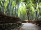 Bamboo Forest Walkway, Arashiyama District Photographic Print by Rachel Lewis
