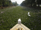 Water-Hyacinth Clogged Canal Between Alappuzha and Kottayam Photographic Print by Anders Blomqvist