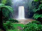 Millaa Millaa Falls Fotoprint van Paul Dymond