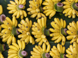 Bananas Sold at Damnoen Saduak Floating Market Photographic Print by Viviane Ponti