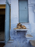Dog Resting on Step Leading to Doorway Photographic Print by April Maciborka