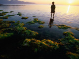 Harvesting Seaweed Beds of Vietnam's South Central Coast Photographic Print by Stu Smucker