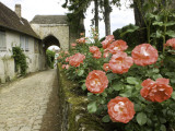 Roses and Archway on Rue Du Chateau in Gerberoy Photographic Print by Barbara Van Zanten