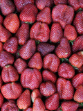 Fresh Strawberries for Sale, Vega Central De Santiago Photographic Print by Paul Kennedy