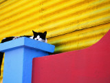 Cat Sleeping in Barrio La Boca Photographic Print by Andrew Bain