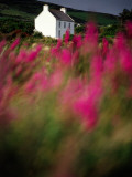 A Farmhouse Through the Wildflowers of Waterville in County Kerr Photographic Print by Richard Cummins