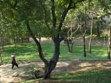 Trees at the Park Near Wat Phnom Photographic Print by Austin Bush