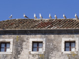 Seagulls on Rooftop Photographic Print by Will Salter