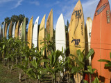 Colourful Surfboard Fence Fotografisk tryk af John Elk III
