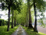 Avenue of Trees Leading Near Vitrac, Dordogne Valley Fotodruck von Barbara Van Zanten