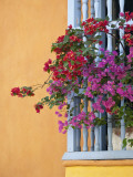 Bougainvillea Adorning Colonial Window Photographic Print by Margie Politzer