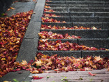 Steps and Autumn Leaves, Jishou Temple Photographic Print by Shayne Hill