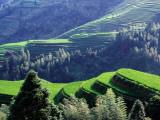 Overhead of Dragon's Backbone (Longji Titian) Rice Terraces Reproduction photographique par Krzysztof Dydynski