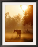 A Horse Stands in a Meadow in Early Morning Fog in Langenhagen Germany, Oct 17, 2006 Framed Photographic Print by Kai-uwe Knoth