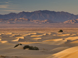 Cadiz Dunes at Sunrise, Sheephole Mountains in Distance in Mojave Desert Fotografie-Druck von Witold Skrypczak