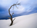 Dead Tree in Delisser Sandhills Photographic Print by Mitch Reardon