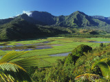 Taro Fields of Hanalei Valley with Mountain Backdrop Photographic Print by Ann Cecil