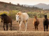 Wild Horses Photographic Print by John Sones