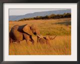 Elephant and Offspring, Masai Mara Wildlife Reserve, Kenya Framed Photographic Print by Vadim Ghirda