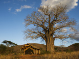 Babu's Camp Fotodruck von Ariadne Van Zandbergen