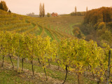 Vineyard in Jeruzalem Wine Region Photographic Print by Richard Nebesky
