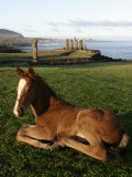 Foal in Front of Moai Statues of Ahu Vai Uri and Tahai. Photographic Print by Paul Kennedy