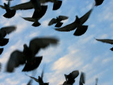 Flock of Birds Photographic Print by Brian Cruickshank