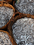 Baskets of Fish on Beach Photographic Print by Paul Kennedy