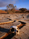 Cracked Mud, Dunes and Monkey Skull in Namib Desert Near Sossusvlei Photographic Print by Karl Lehmann