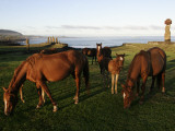 Horses Grazing in Front of Ahu Vai Uri, Tahai and Ko Te Riku Photographic Print by Paul Kennedy
