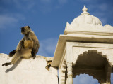 A Monkey on One of Pushkar's Lakeside Temples Photographic Print by Orien Harvey