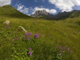 Wildflowers in Valley Beneath Mt Chaukhi Fotografiskt tryck av Mark Daffey