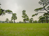 Kokyo-Gaien (Imperial Palace Gardens) Park, Covered with Pine Trees Photographic Print by Merten Snijders